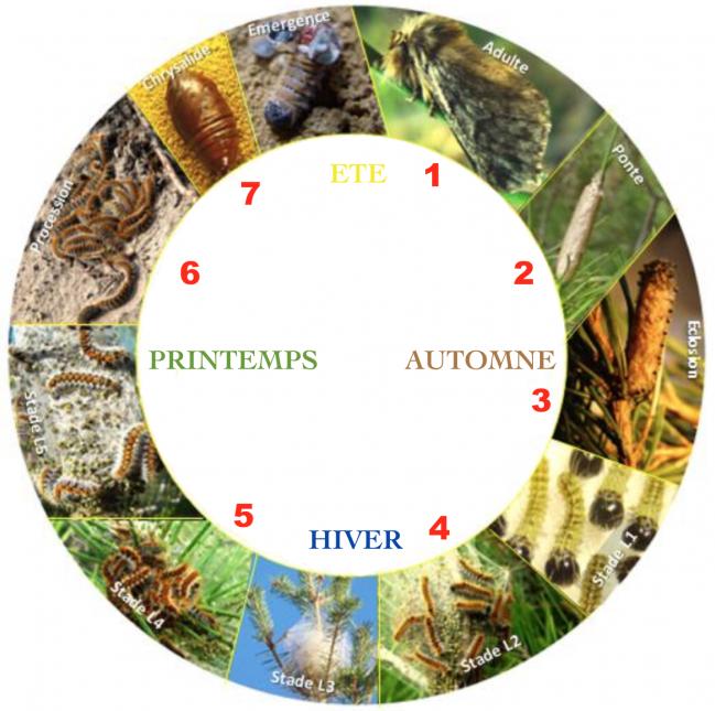 Cycle bio